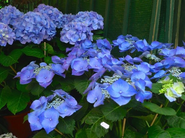 Marché aux Fleurs Reine Elizabeth II