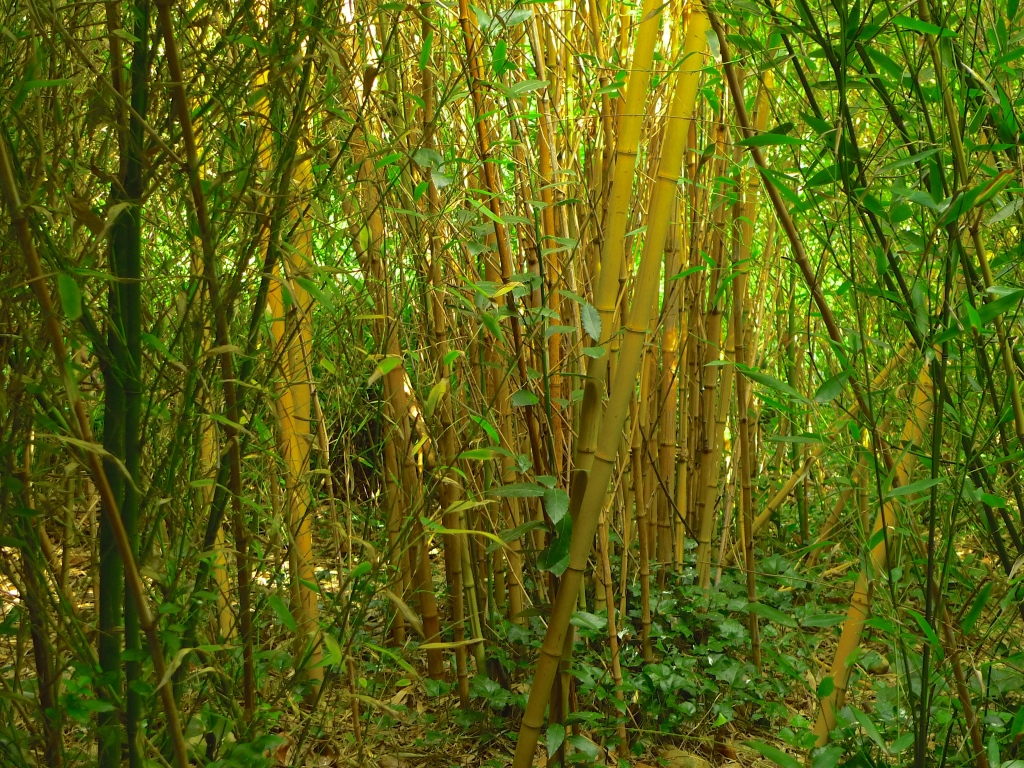 Bamboo Garden, Parc de la Villette