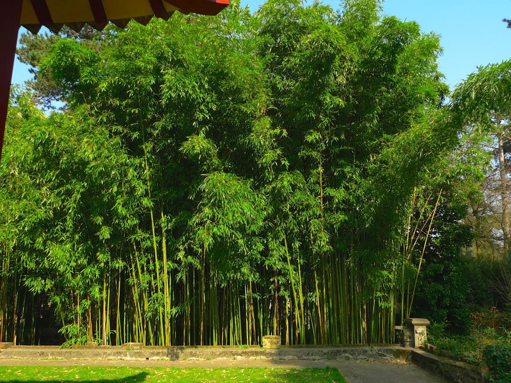 Jardin d'Agronomie Tropical - Nogent sur Marne